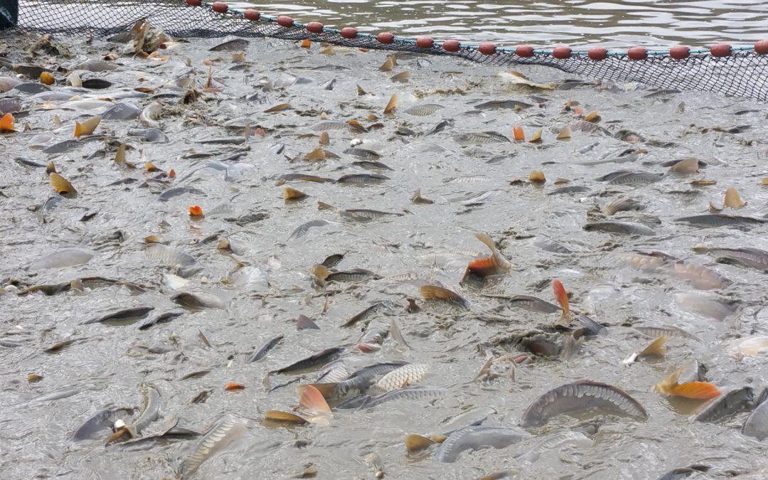 Elevage de poissons en Alsace